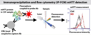 Figure: Schematic of detection of mHTT in CSF by immunoprecipitation and flow cytometry
