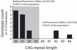 Figure. Number of individuals with a genotype of 36 CAG repeats or greater, out of a total of 7,315 individuals examined from the general population.